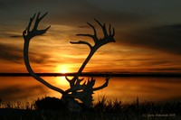Sunset-Antlers