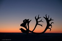 Sunset-Purple Sky and Antlers